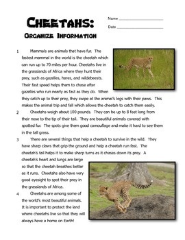 Organize Information - Reading and Writing About Cheetahs