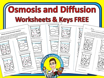 Osmosis and Diffusion Worksheet