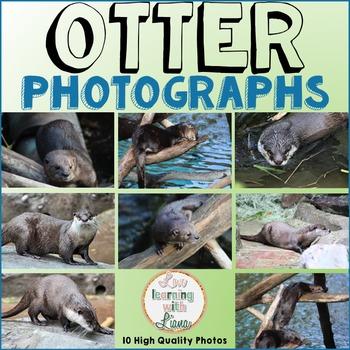 Otter Animal Photos Photographs
