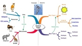 Overview of Mind Maps