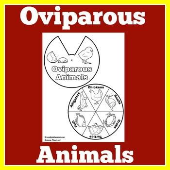 Oviparous Animals Activity | Oviparous Animal Craft