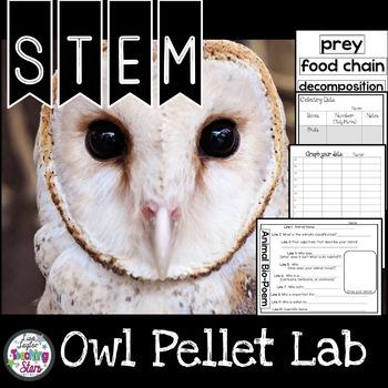 Owl Pellet Lab