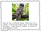 Owls Literacy and Science Unit for 1st Grade (Aligned to NGSS)