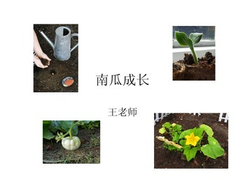 PPT- Pumpkin Life Cycle in Chinese