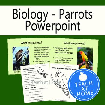 Parrot Power Point Presentation and Worksheets, Homeschool