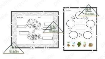 Plants Worksheet (Spanish)