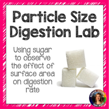 Particle Size Lab- Digestive System