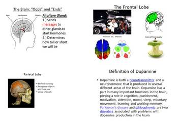 Parts of Brain Powerpoint Anatomy or Psychology Dopamine L