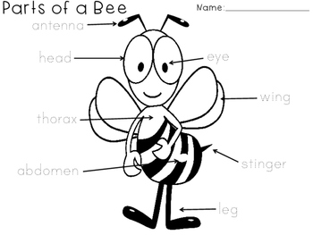 Parts of a Bee Worksheet