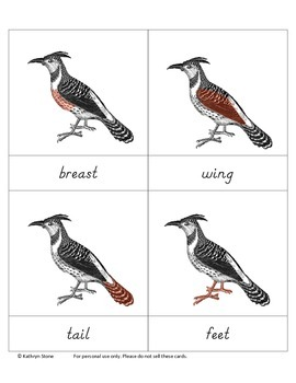 Parts of a Bird Cards