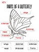 Parts of a Butterfly