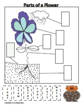 Parts of a Flower Freebie from Woodchuck Writing Workshop