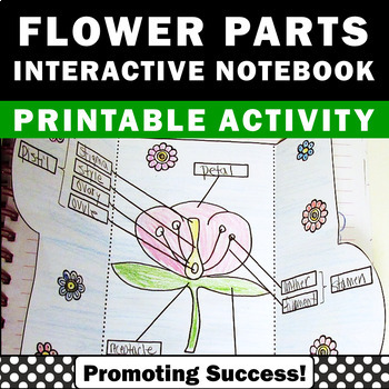 Parts of a Flower Diagram Interactive Science Notebook Pla