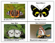 Parts of a Monarch Butterfly Three Part Cards