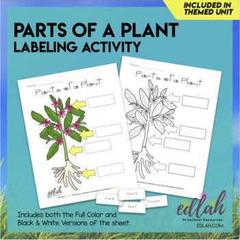 Parts of a Plant Activity Sheet