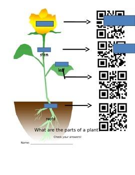 Parts of a Plant QR Code Worksheet