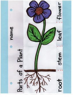 Parts of a Plant-an Interactive Tool
