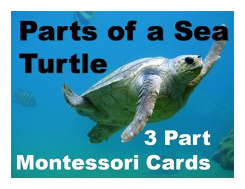 Parts of a Sea Turtle Montessori Three Part Cards - color