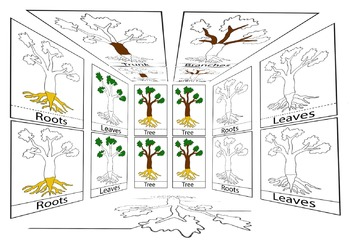 Montessori Parts of a Tree 3 part cards