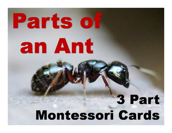 Parts of an Ant Montessori Three Part Cards - color and bl