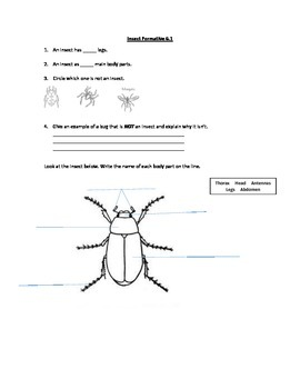 Parts of an Insect Assessment