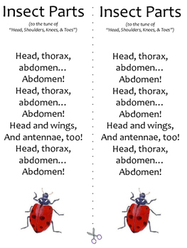 Parts of an Insect Song Printable