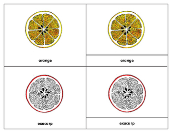 Parts of an Orange: Three Part Cards