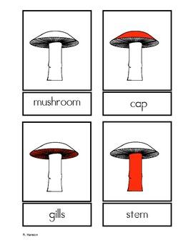 Parts of the Mushroom Three Part Cards for Fungi Unit