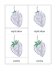 Parts of the Strawberry Nomenclature Cards
