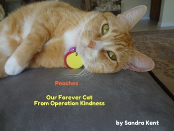 Peaches Our Forever Cat