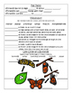 PebbleGo ~ Monarch Butterfly Research Graphic Organizer