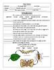PebbleGo ~ Moths Research Graphic Organizer ~ FREEBIE