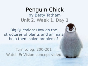Penguin Chick PowerPoint Reading Street 3.2.1