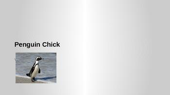 Penguin Chick Vocab Power Point Presentation