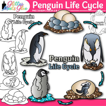 Penguin Life Cycle Clip Art {Teach Animal Groups, Habitats
