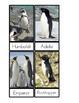 Penguin Species Three Part Cards