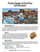 Petrified Sponges & Fossil Wood (Geology)