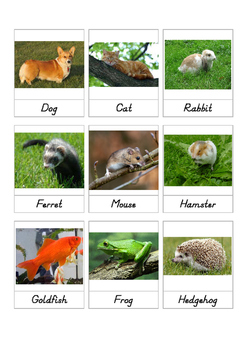 Pets Toob 3 part cards
