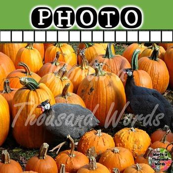 Photo: Autumn Pumpkins and Pheasants