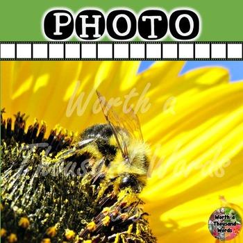 Photo: Bee Gathering Pollen - B