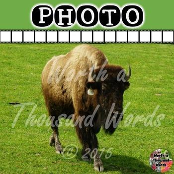 Photo: Buffalo