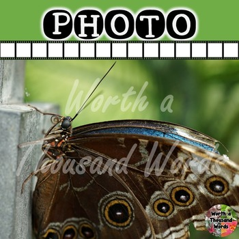 Photo: Butterfly Close-up