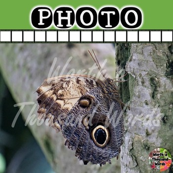 Photo: Butterfly on Tree Branch