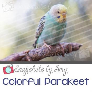 Photo: Colorful Bird