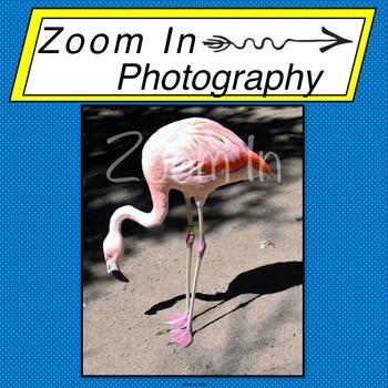 Stock Photo: Flamingo