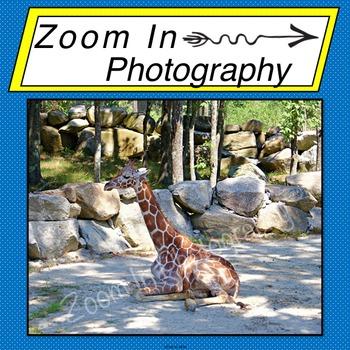 Stock Photo: Giraffe