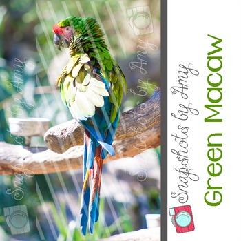 Photo: Green Macaw