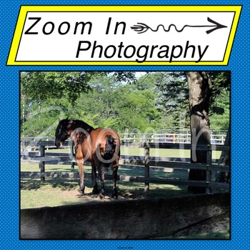 Stock Photo: Horse