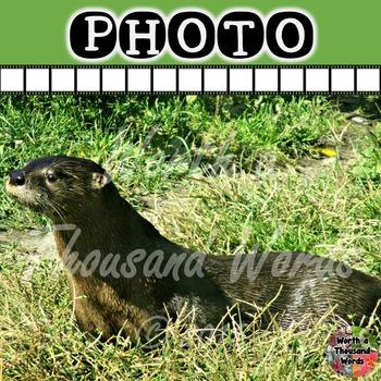 Photo: Otter