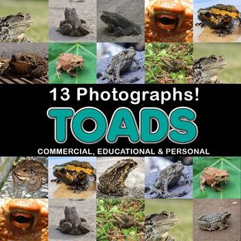 Photos Photographs Photo Toads - 15 real images, clip art